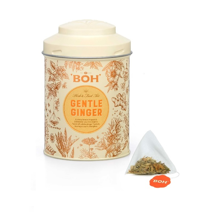 BOH Gentle Ginger Pyramid Teabag